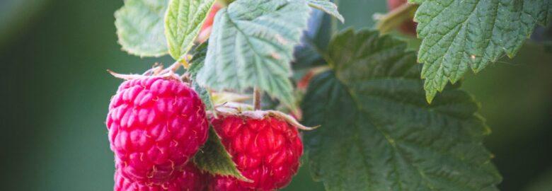 Startforth Soft Fruit
